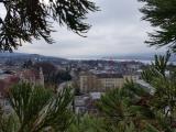 <h5>im Mammutbaum über Zürich</h5>